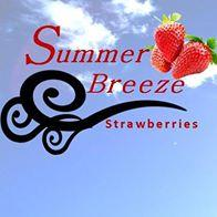 Summer Breeze Strawberries